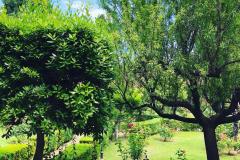Giardino chiostro - 7